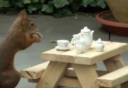 Eichhörnchen als Instagram-Stars