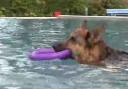 Wenn Vierbeiner und Zweibeiner gemeinsam schwimmen gehen