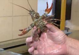 Senckenberg Institut untersucht invasive Arten